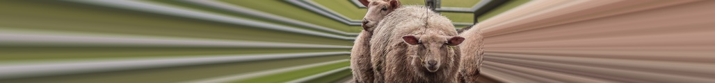 Episode 11: The role of sheep in science fiction